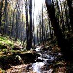 Természeti képek, bakonyi hangulatok – Fotópályázat